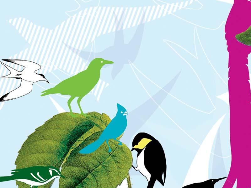 Birds, Sommer 2006